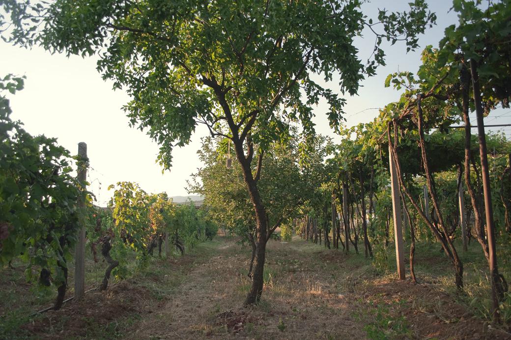 Участок с виноградником возле р. Морача