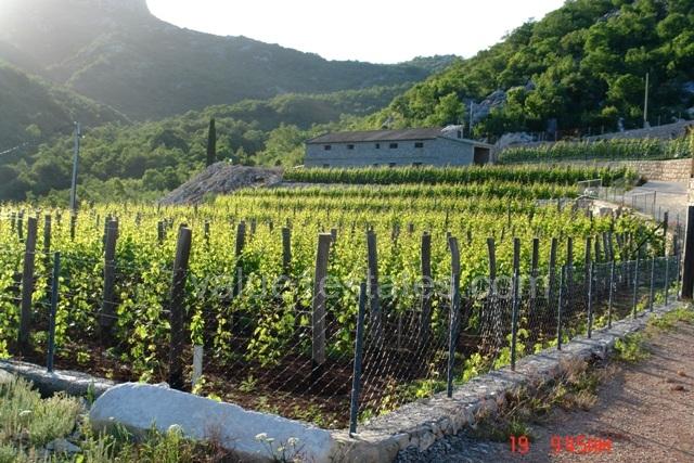 Этно имение с виноградником